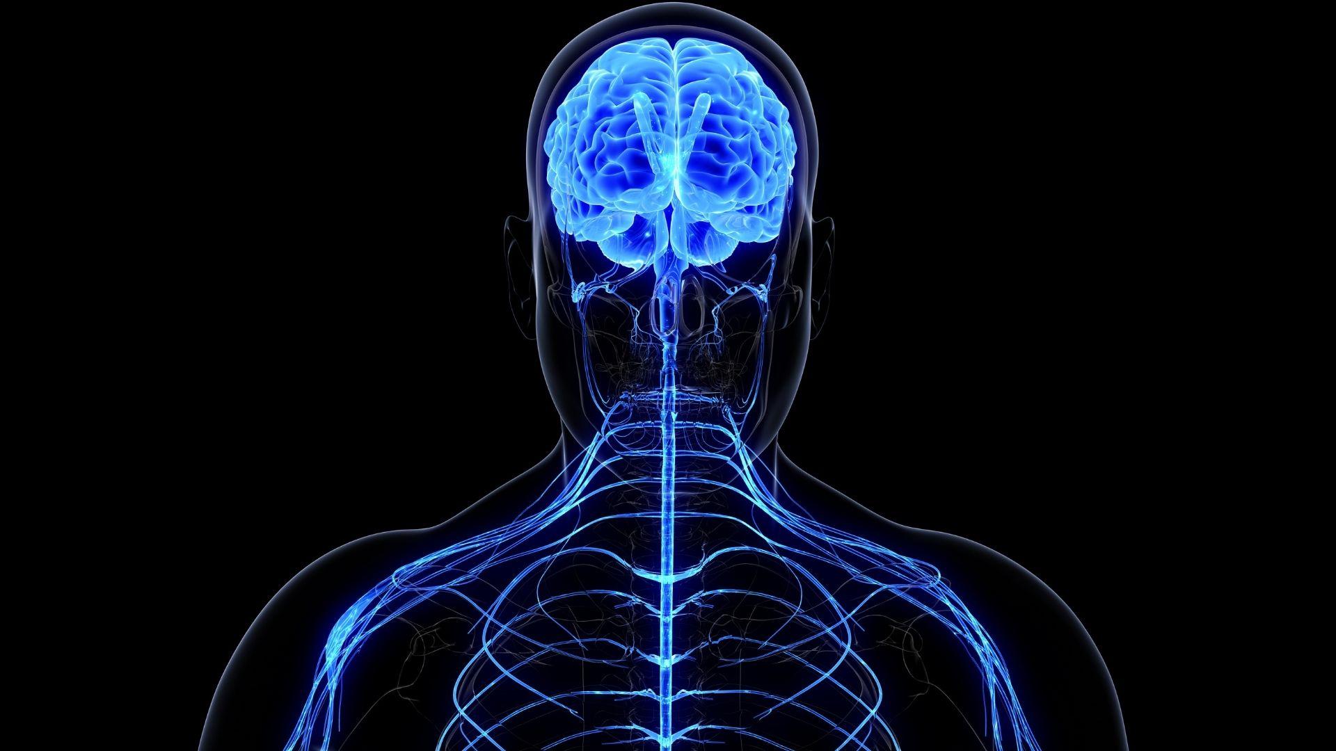 Ricerca Neuromarketing Cervello